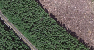 A wider line of Sitka Spruce and Red Cedar. Imagery ©2014 DigitalGlobe, Landstat, State of Oregon, USDA Farm Service Agency. Map Data ©2014 Google