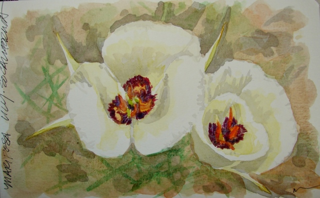 w16-8-6-pentalic-mariposa-lily-01